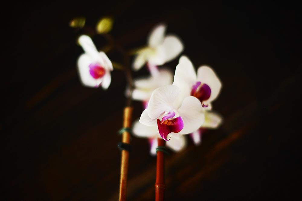 130709orchids.jpg