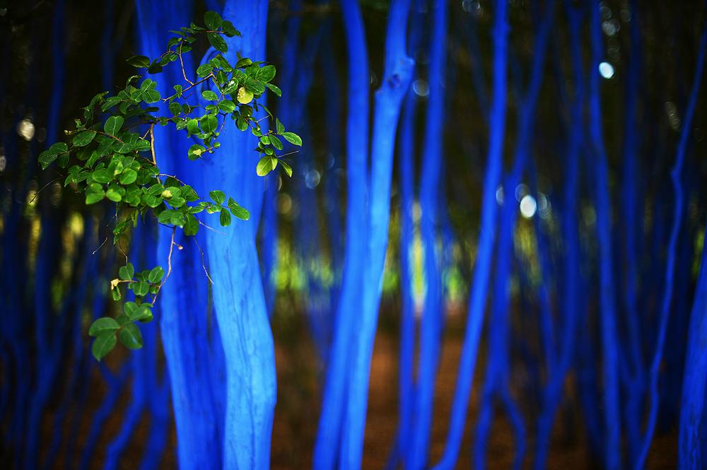 bluetrees4.jpg