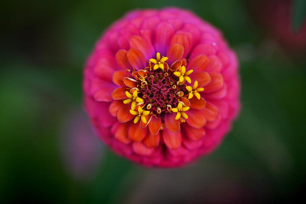 130712testflower.jpg