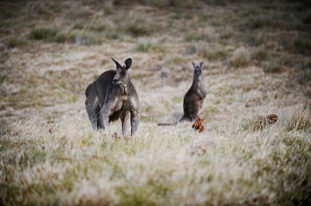 australia24.jpg