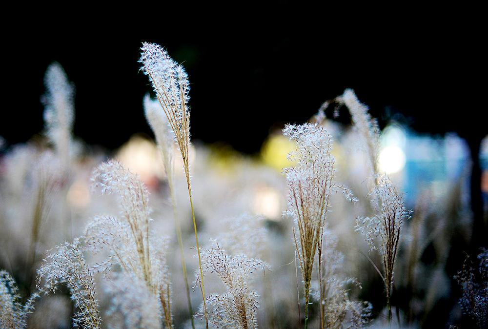 131203wheat.jpg