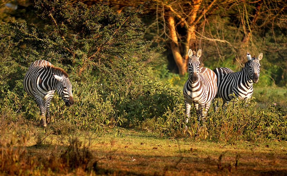 Kenya, July 2011