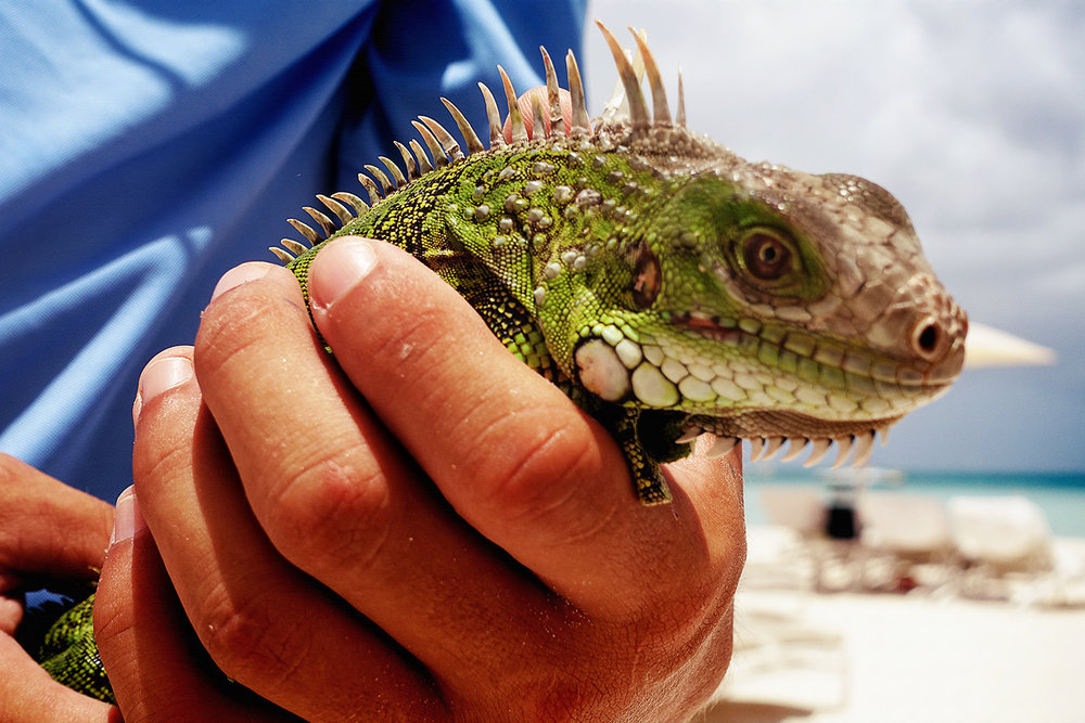 aruba  :: august 2016
