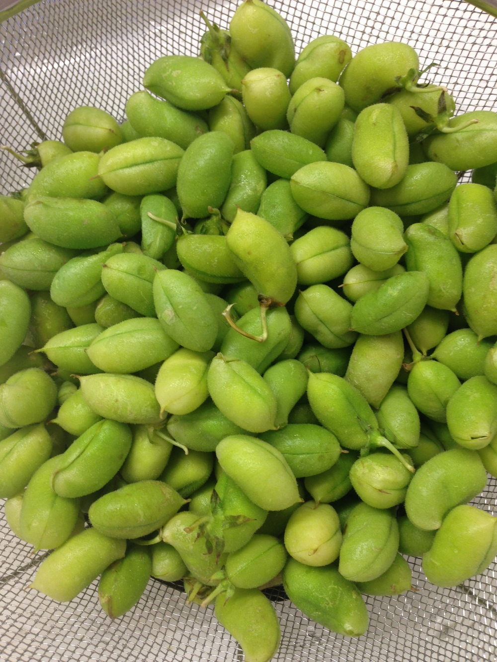fresh chick peas