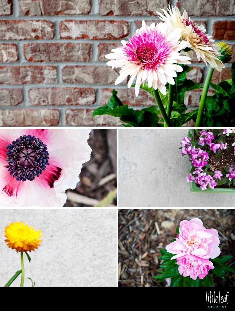 littleleaf_spring_flowers.jpg