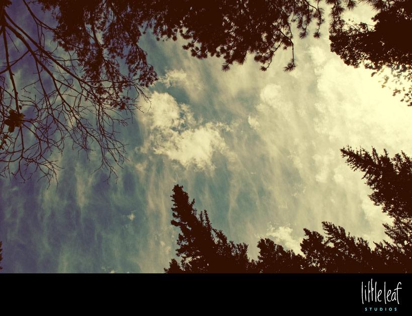 littleleaf_creek_01.jpg