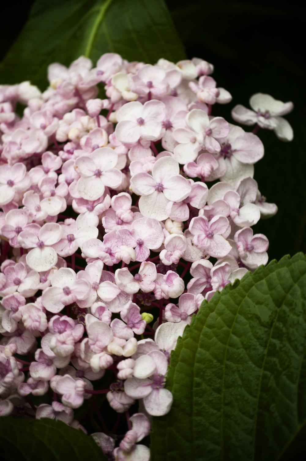 _NIK4666_garden.jpg
