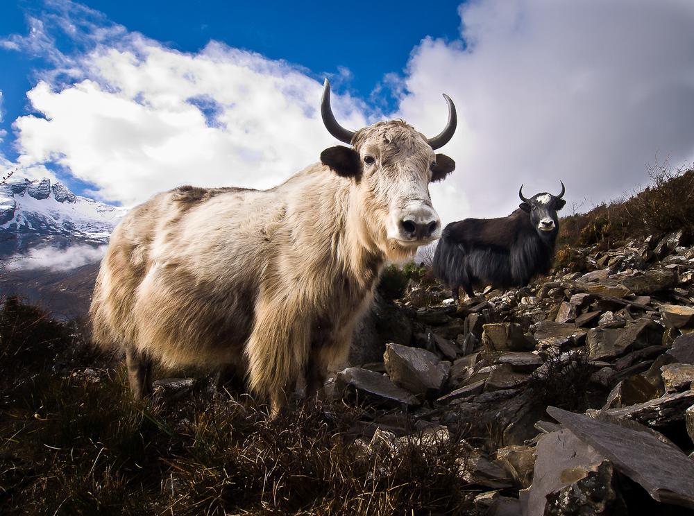 Nepal_13_1011.jpg