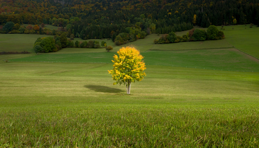Autumn in the Vercors