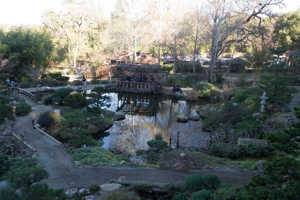 2015 - 01 - 24 - sbus - hakone gardens-21.jpg