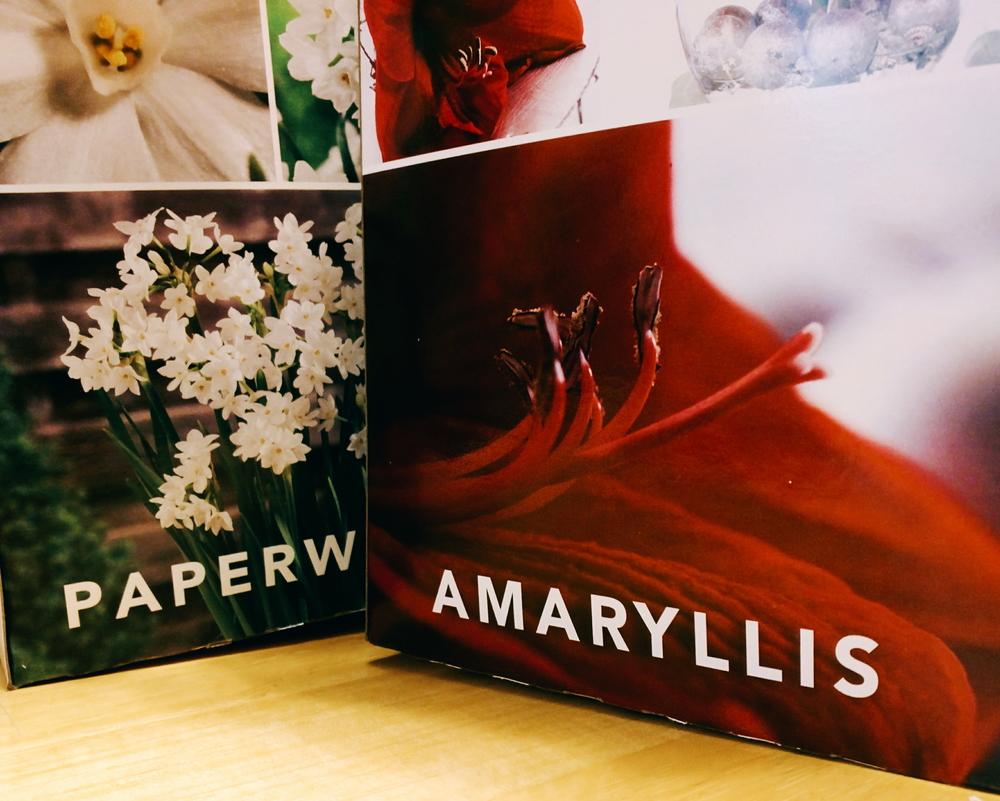 paperwhite_amaryllis_boxes