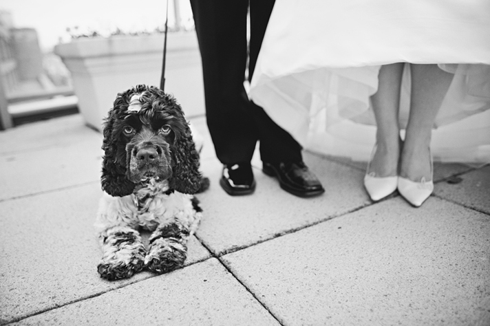 Dogs at weddings, Maria Vicencio Photography