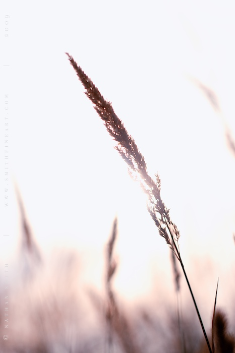 blog/BLOG_2009_07_17 _[4 of 6].jpg