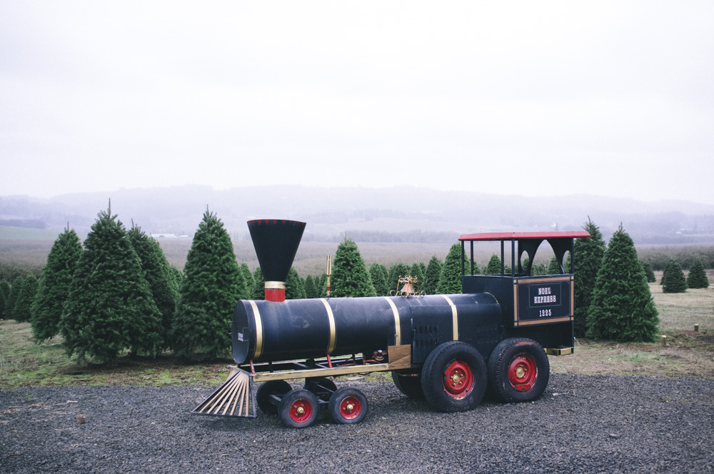 Christmas-Tree-Farm-0003.jpg