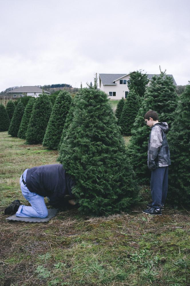 Christmas-Tree-Farm-0005.jpg