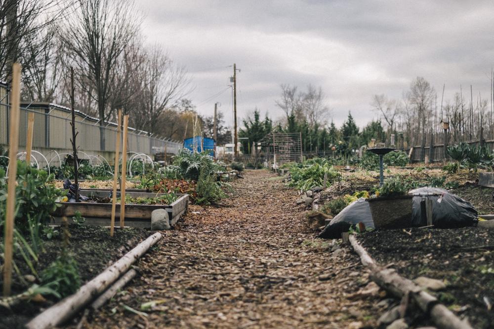 Community-Garden-SO-0001-4.jpg