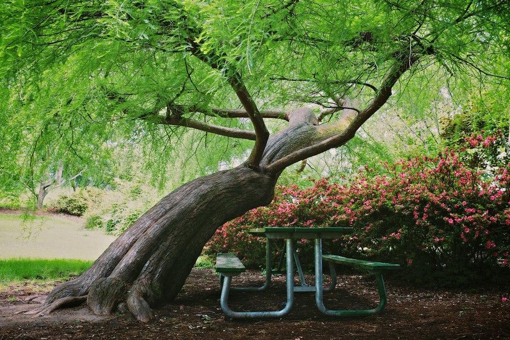 Scouting-Bush-Park 004.jpg