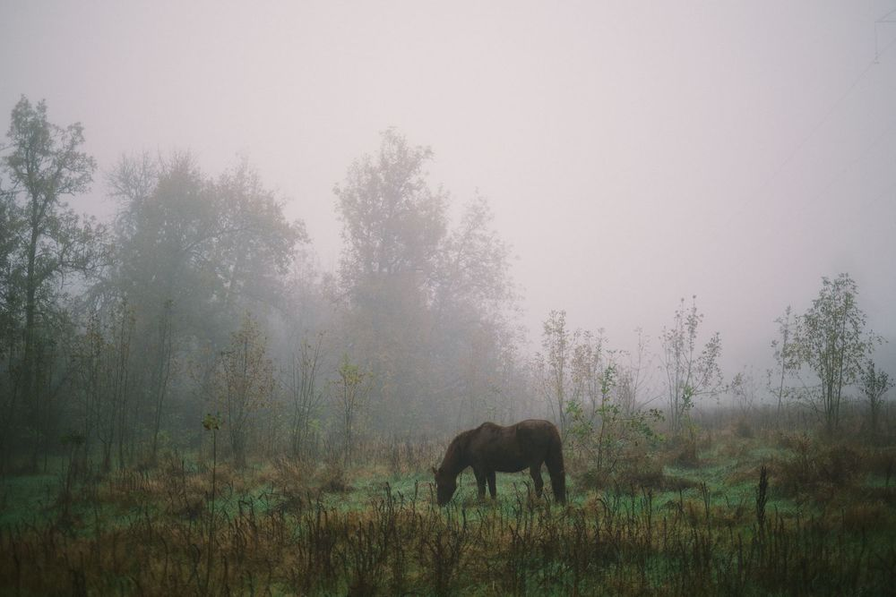 2013-10-03-Foggy Morning-078.jpg