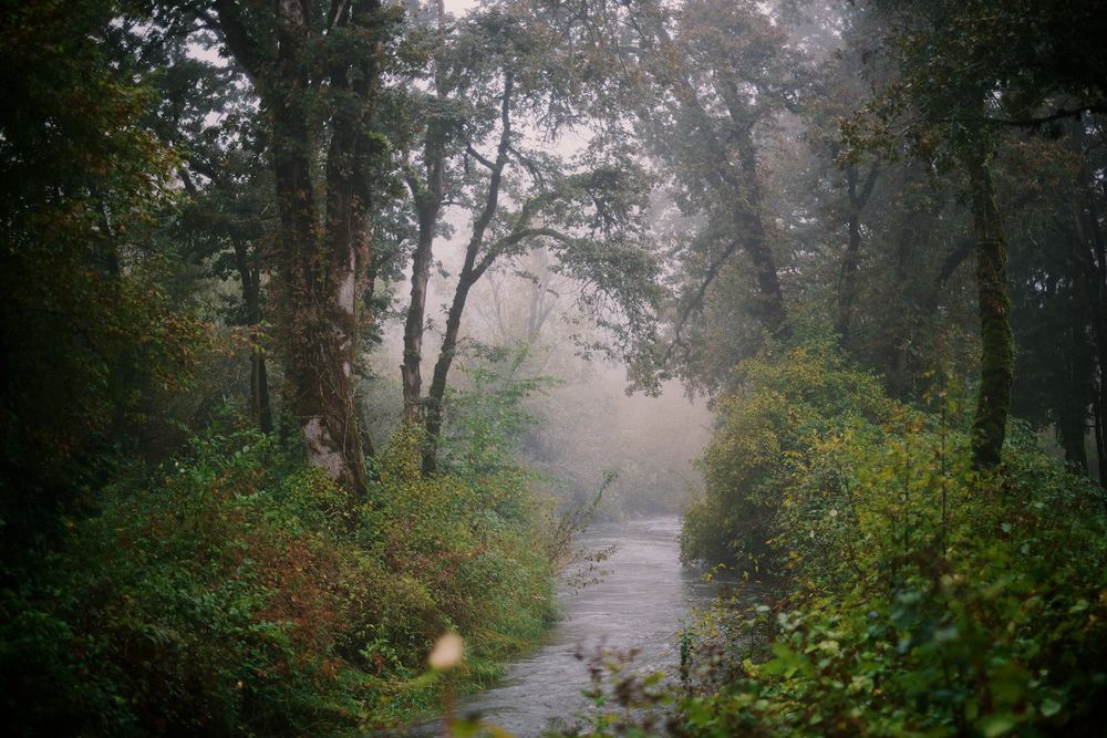 2013-10-03-Foggy Morning-095.jpg
