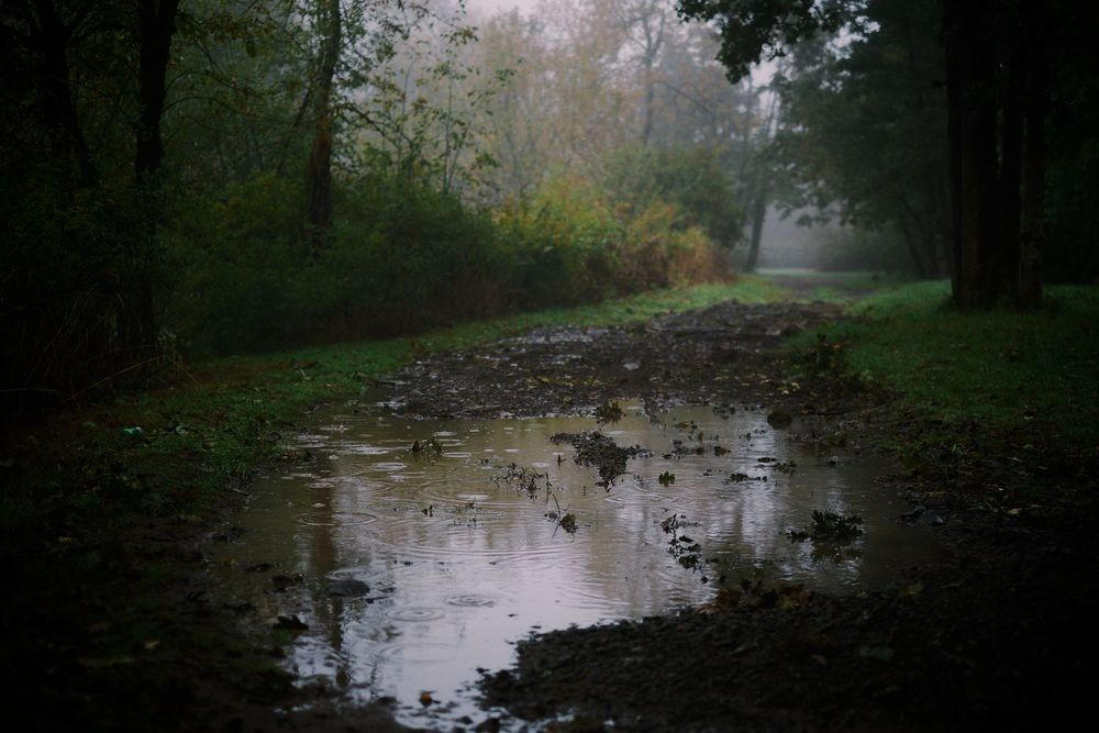 2013-10-03-Foggy Morning-097.jpg