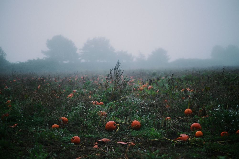 2013-10-03-Foggy Morning-107.jpg