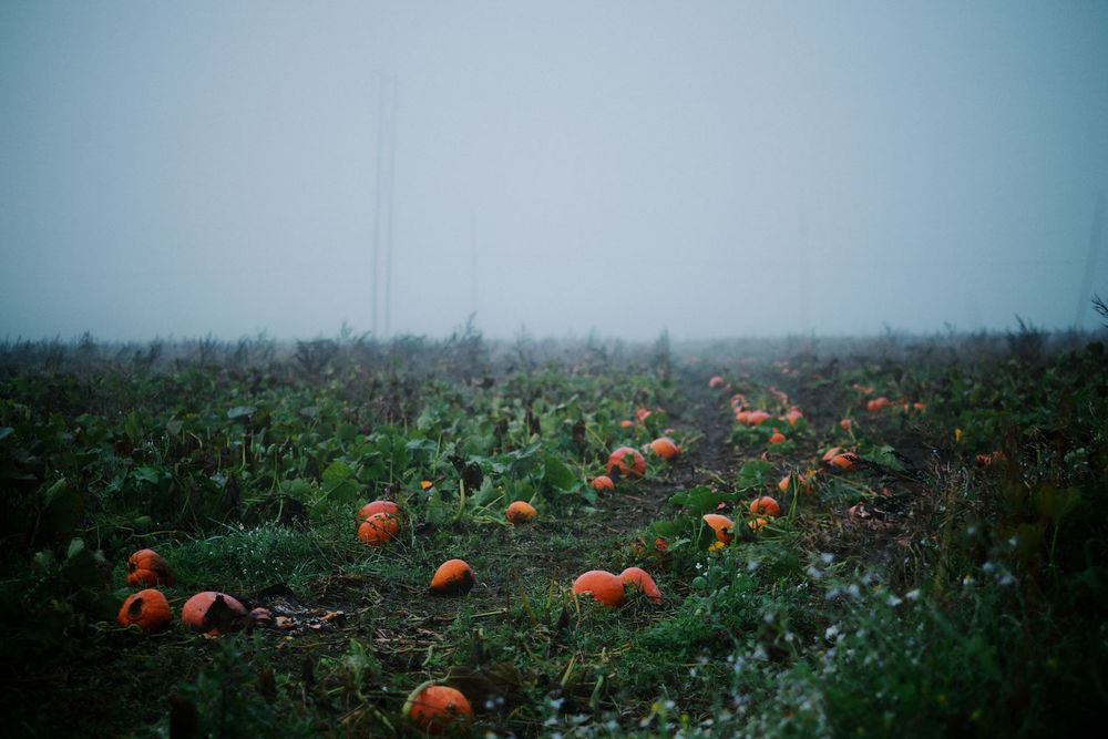 2013-10-03-Foggy Morning-109.jpg