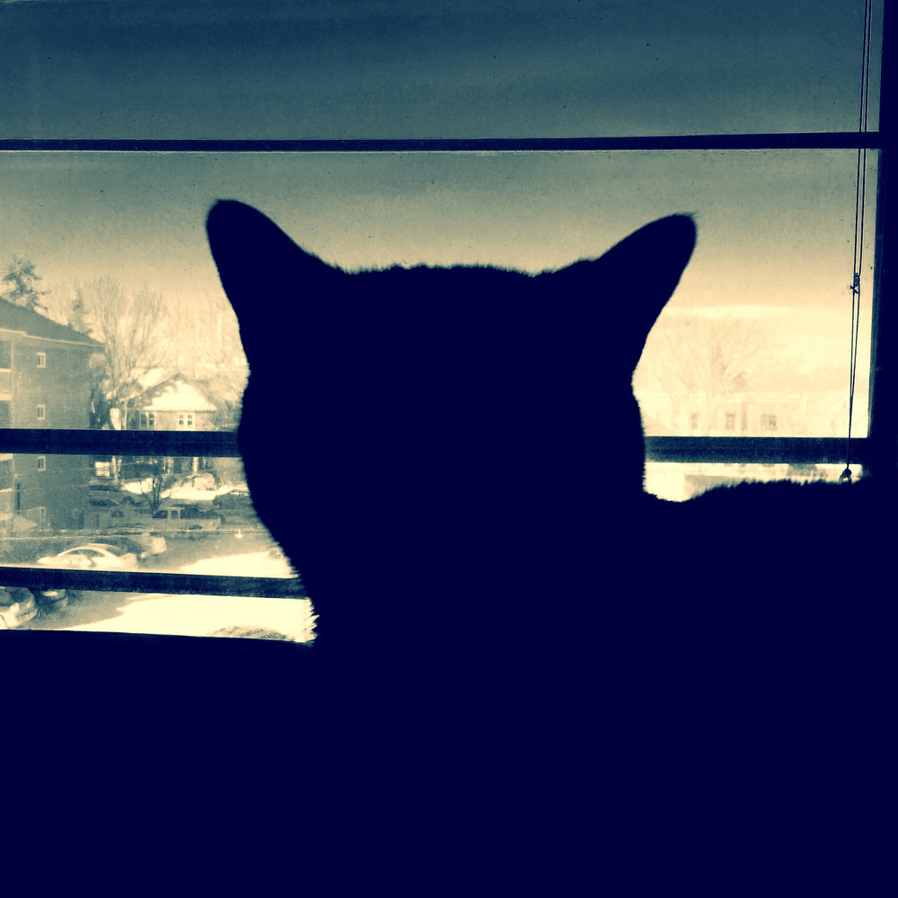 Today, co-worker Oskar is keeping watch for me.