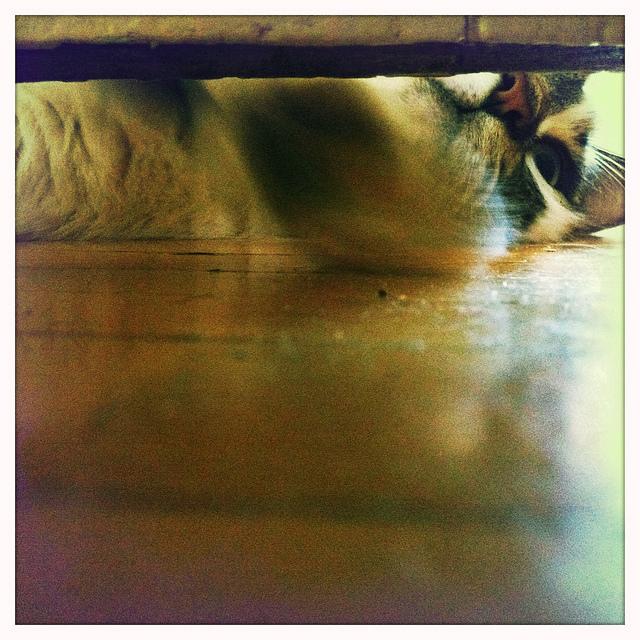 This is Onion, taken from under the bedroom door.