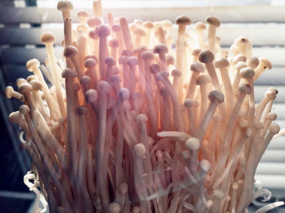 Enoki mushrooms!