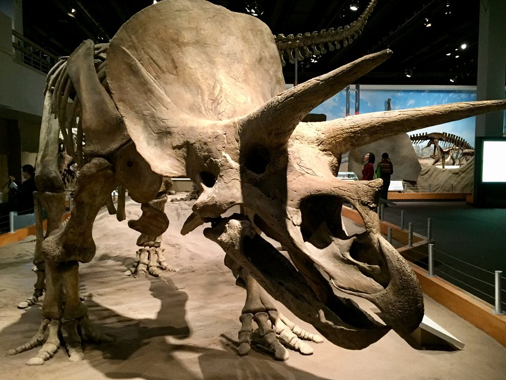 8-the-royal-tyrrell-museum_30708310576_o.jpg