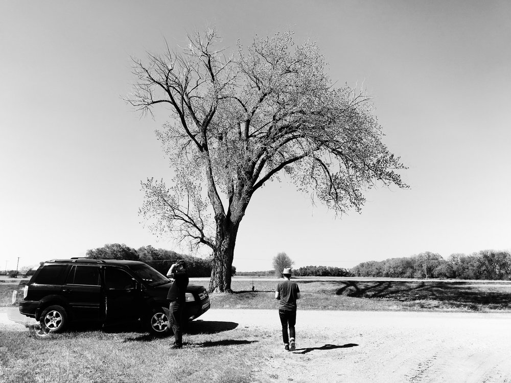 Aidan and his favourite tree
