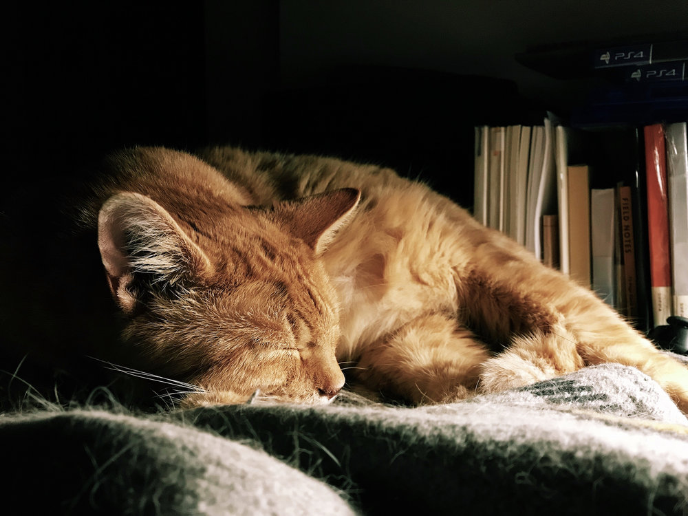 Augie, my orange tabby sleeping in the dark under lamplight
