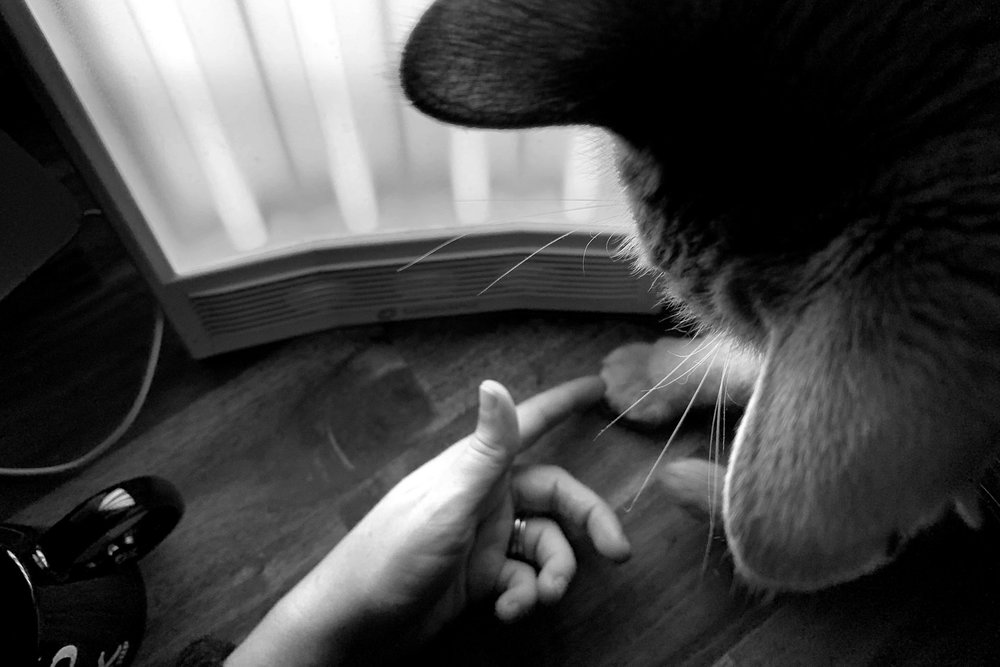 a person's hand reaches out to a kitty's paw while he sits in front of a light therapy lamp