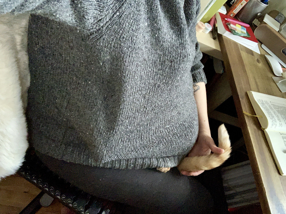 a cat tail sticking out from under my sweater while I sit at my desk