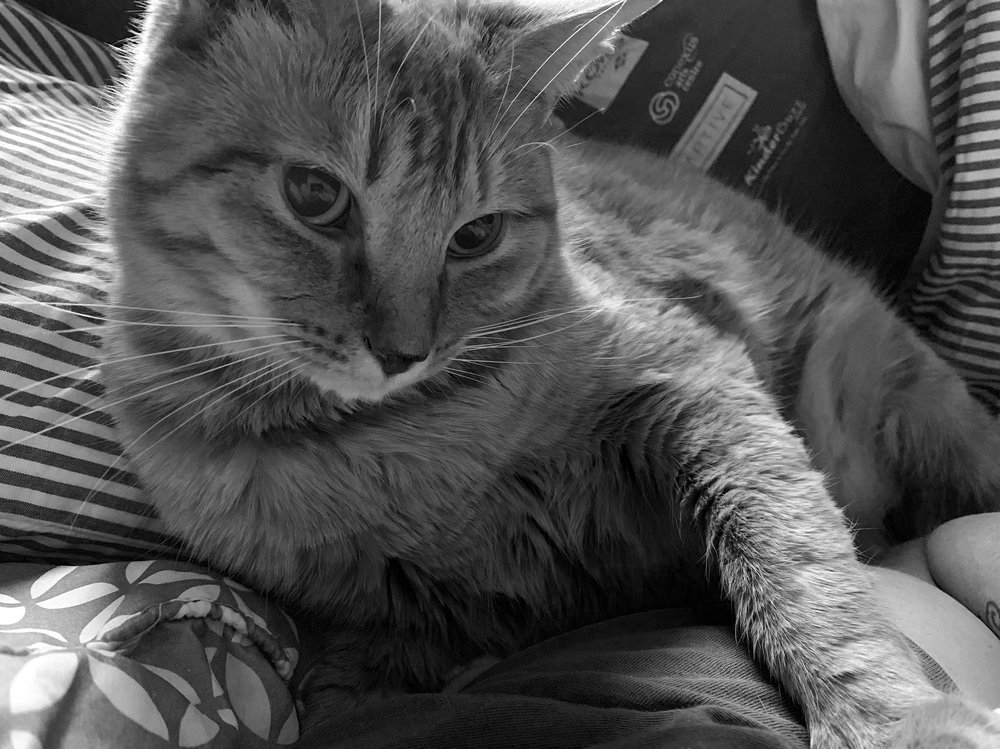 a close-up black and white photo of a cat reclining on a bed