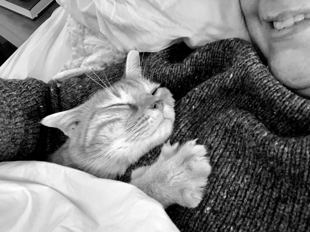 a black and white photo of a cat a cat snuggling up to a person's chest from under the covers