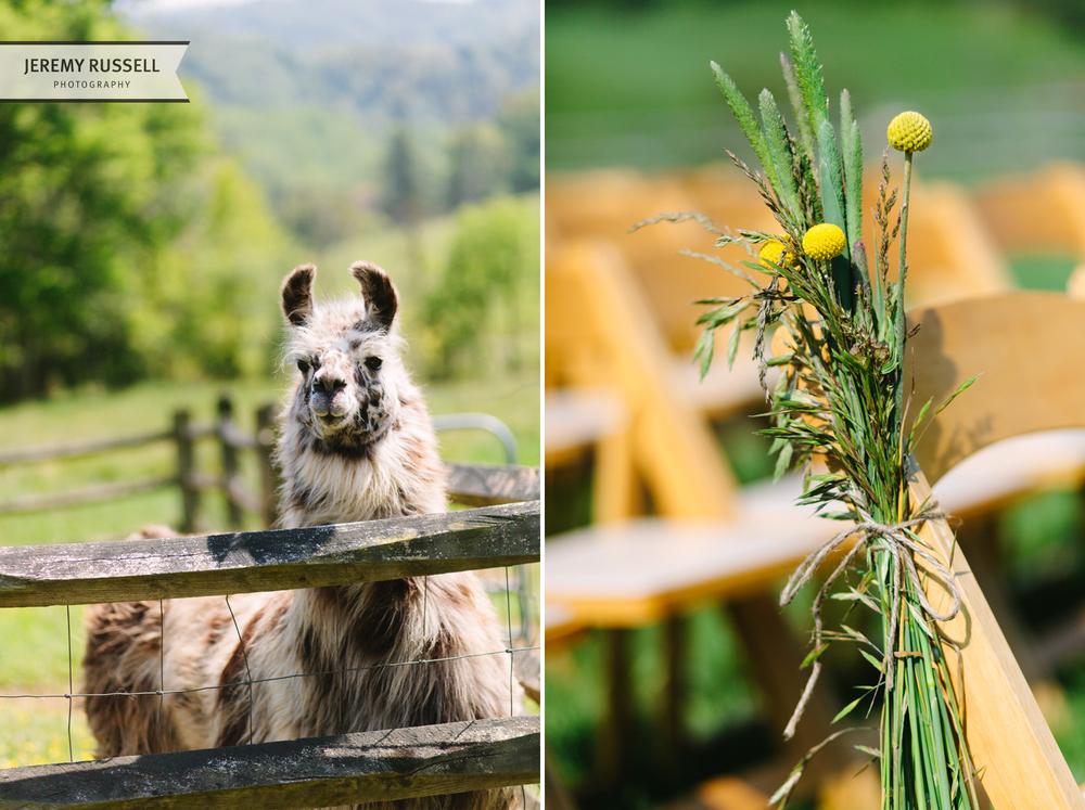 Claxton Farm llama and flowers