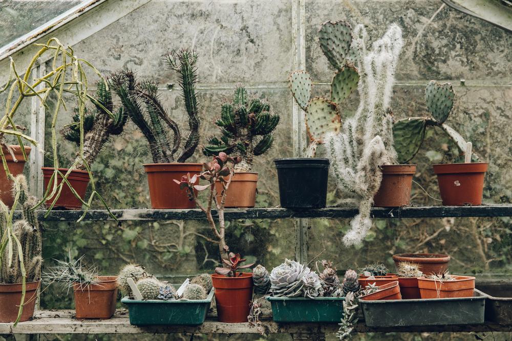 kaktushylle.jpeg
