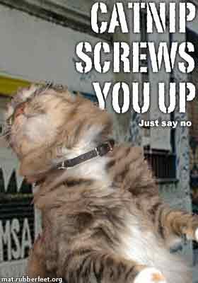 catnipscrewsyouup.jpg