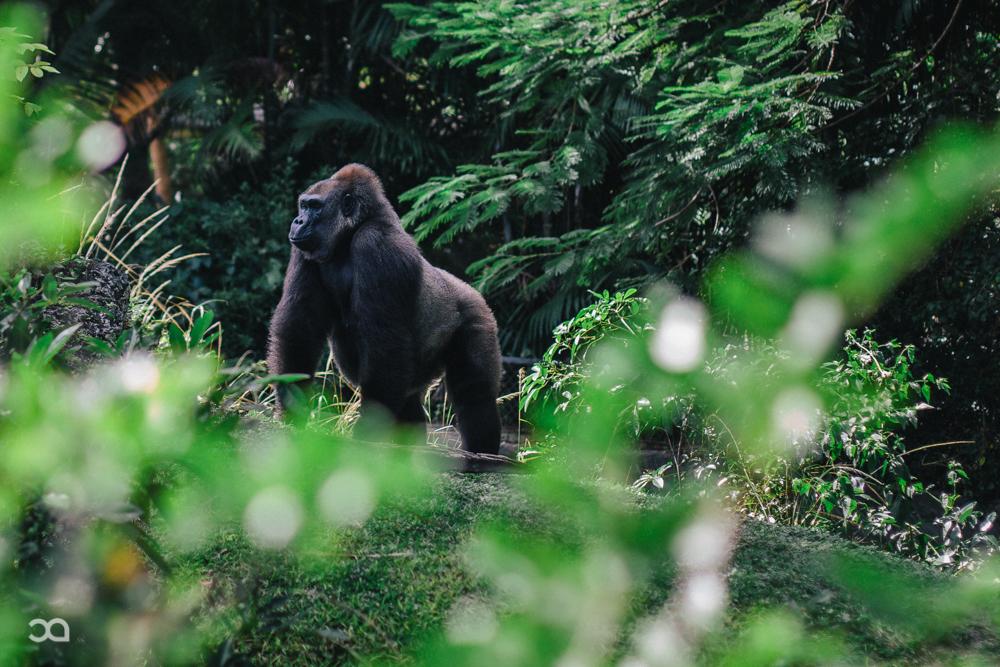 Zoo Day-8.jpg