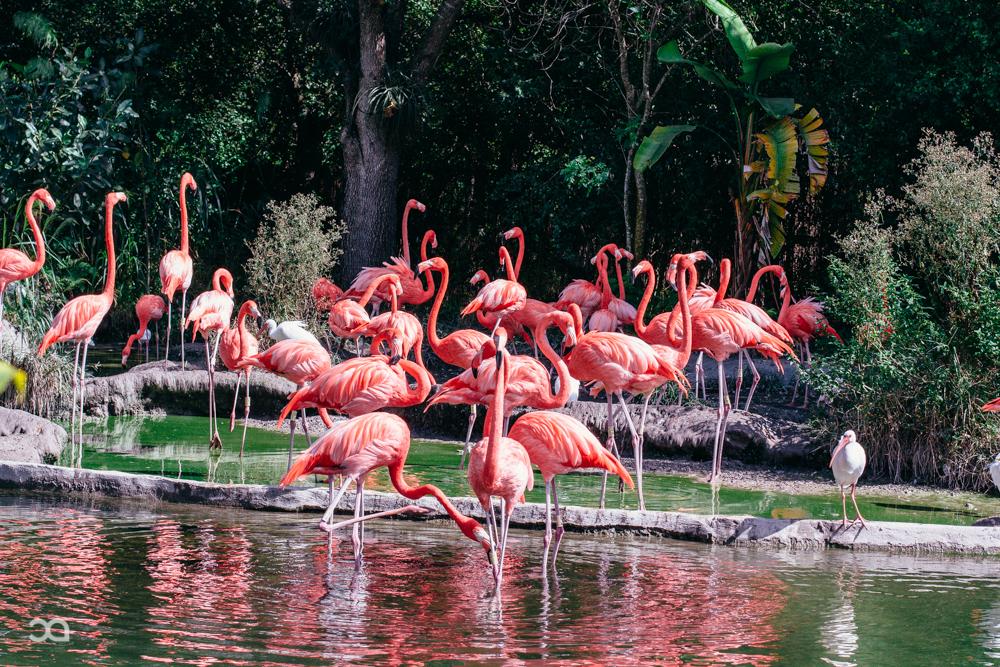 Zoo Day-9.jpg