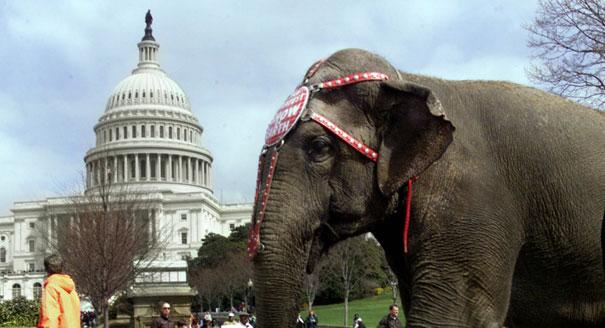 111109_elephants_circus_ap_328.jpeg
