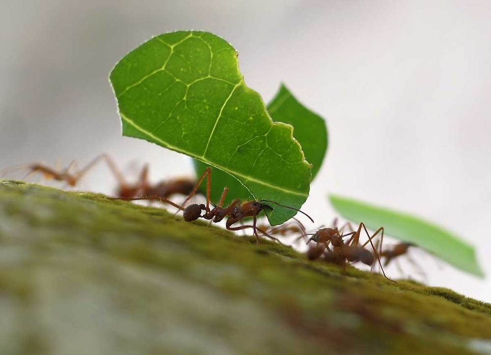 Ants and Earthquakes