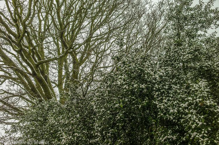 cold-spring-canterbury.jpg