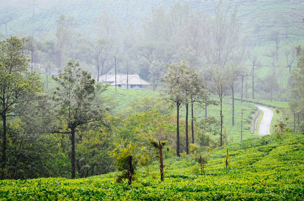 Kadumane Tea Estate