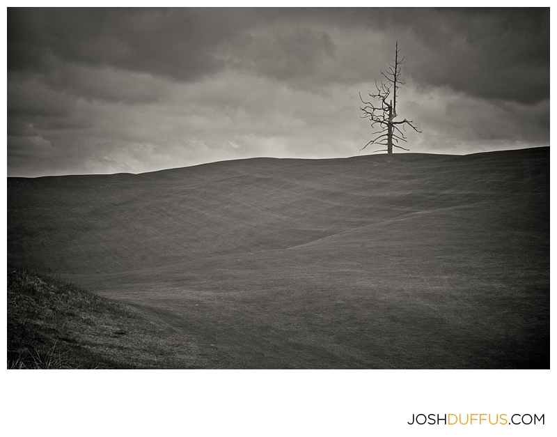 This is the lone tree in could come into play.