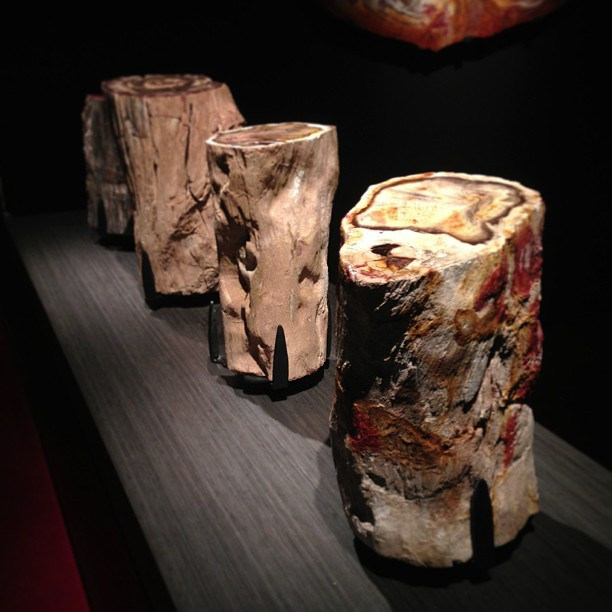 Petrified logs! (at Houston Museum of Natural Science)