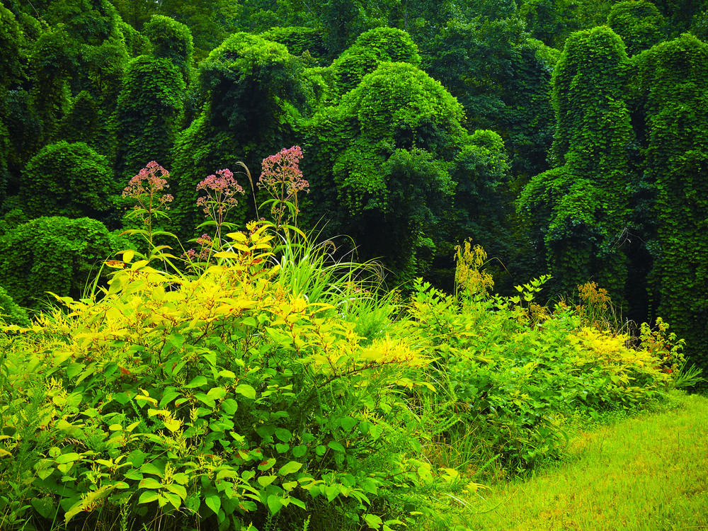 """Kudzu"" ~ Pineville, Kentucky © 2014 Skip Hunt"