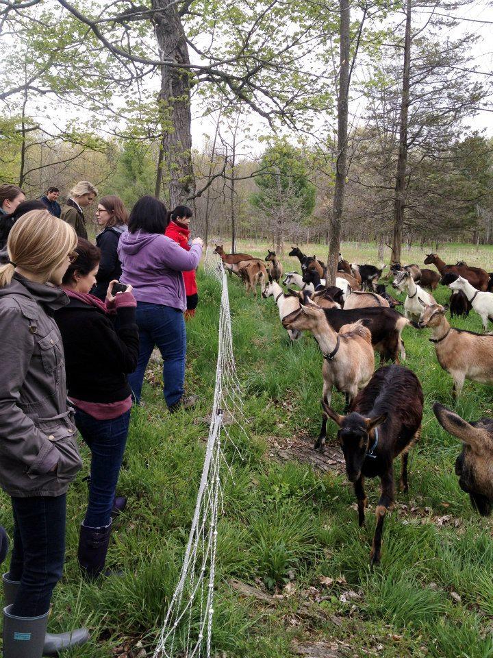 vermont goat farm