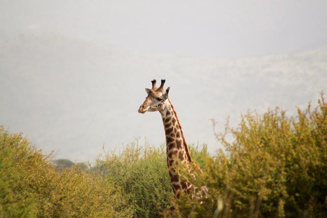 Africa-71.jpg